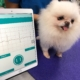 How can AI help veterinarians break through limitations on cardiac assessments for pets?
