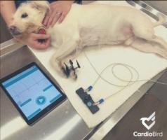 CardioBird動物醫院操作情景