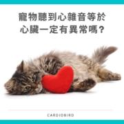 心雜音等於心臟異常嗎 ?