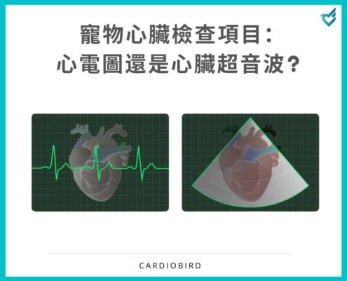 寵物心臟檢測該使用心電圖還是心臟超音波?