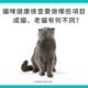 成貓、好貓健康檢查有何不同