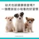 幼犬也該健檢嗎?