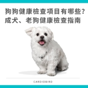 成犬、老犬健康檢查指南