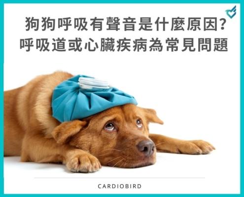 狗狗呼吸有聲音是什麼原因?呼吸道或心臟疾病為常見問題