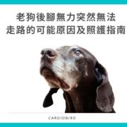 老狗後腳無力突然無法 走路的可能原因及照護指南