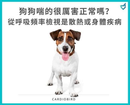 狗狗喘的很厲害正常嗎?從呼吸頻率檢視是散熱或身體疾病