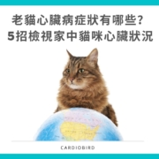 老貓心臟病症狀有哪些? 5招檢視家中貓咪心臟狀況