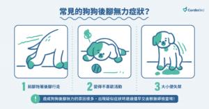 常見的老狗後腳無力症狀