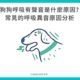 狗狗呼吸有聲音是什麼原因?常見的呼吸異音原因分析