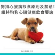狗狗心臟病飲食原則及禁忌!維持狗狗心臟健康飲食要訣