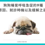 狗狗睡覺呼吸急促的9種 原因、就診時機以及緩解之道
